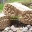 รองเท้า Magnum ข้อสั้น thumbnail 6