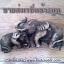 ขายส่งเรซิ่นช้าง นูนมีมิติ สำหรับนำไปประกอบชิ้นงาน ตกแต่งสินค้าให้มีความสวยงาม เรซิ่นรูปสัตว์หลากแบบคลิก thumbnail 1