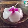 ขายส่งเทียนหอมช่อดอกในกะลาเรือ เทียนหอมดอกไม้ เทียนลีลาวดี เทียนกุหลาบ เทียนออคิด ดอกไม้เทียนหอมอโรมา Aroma-candle