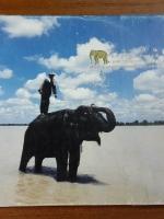 สถาบันคชบาลแห่งชาติ : องค์การอุตสาหกรรมป่าไม้เส้นทางแห่งความหวังของคนรักษ์ช้าง