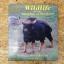 Wildlife in the Kingdom of Thailand / แอล บรู๊ซ เคคูลี่ thumbnail 1